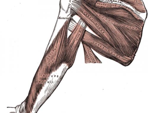 El famoso manguito de los rotadores del hombro